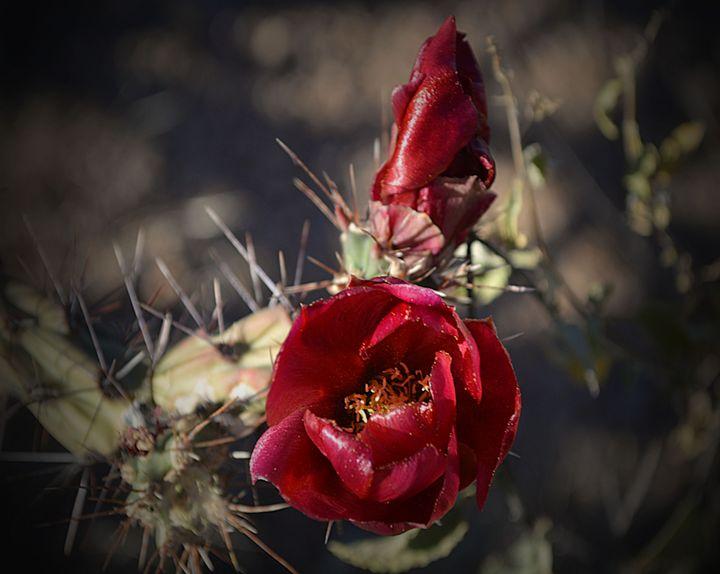 New Bloom - John Wortman