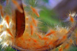 Cradle Fluff - Ethereal Organics...diane montana jansson