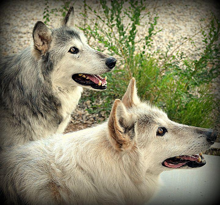 Wolves I - Ethereal Organics...diane montana jansson