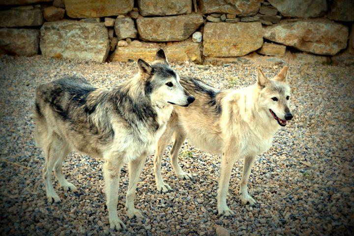 Wolves III - Ethereal Organics...diane montana jansson