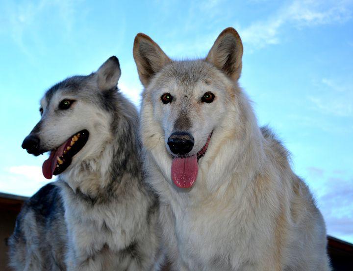 Wolves IV - Ethereal Organics...diane montana jansson
