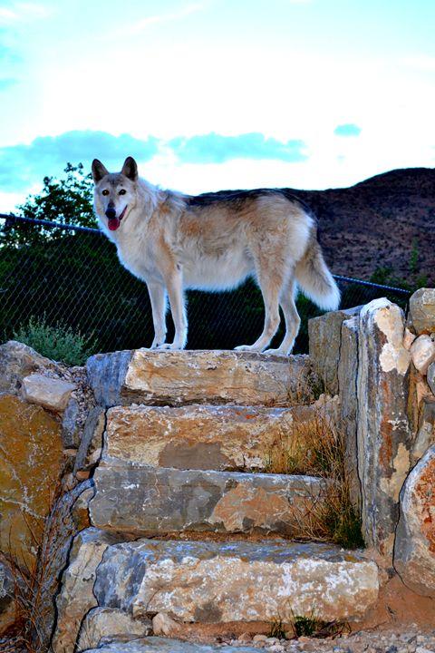 Wolves V - Ethereal Organics...diane montana jansson