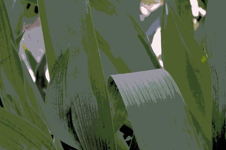 What An Iris Leaves III - Ethereal Organics...diane montana jansson
