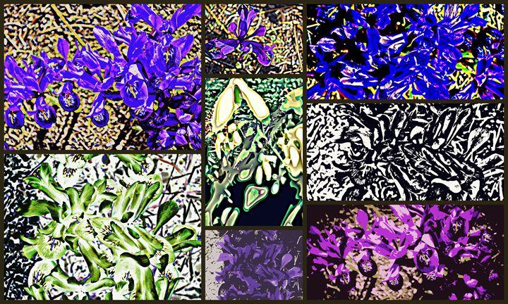 Bird's Eye View of Spring - Ethereal Organics...diane montana jansson