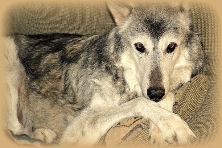 Wolves XI - Ethereal Organics...diane montana jansson