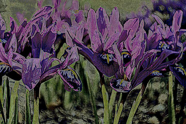 Iris IV - Ethereal Organics...diane montana jansson