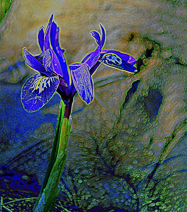 iris II - Ethereal Organics...diane montana jansson