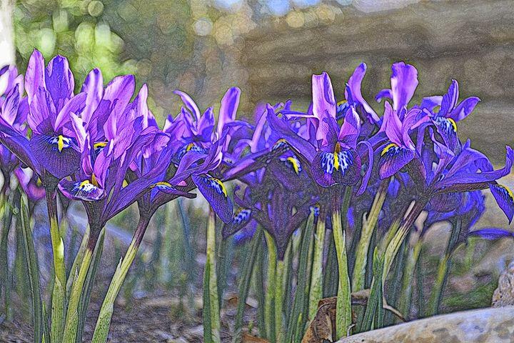 Iris VII - Ethereal Organics...diane montana jansson