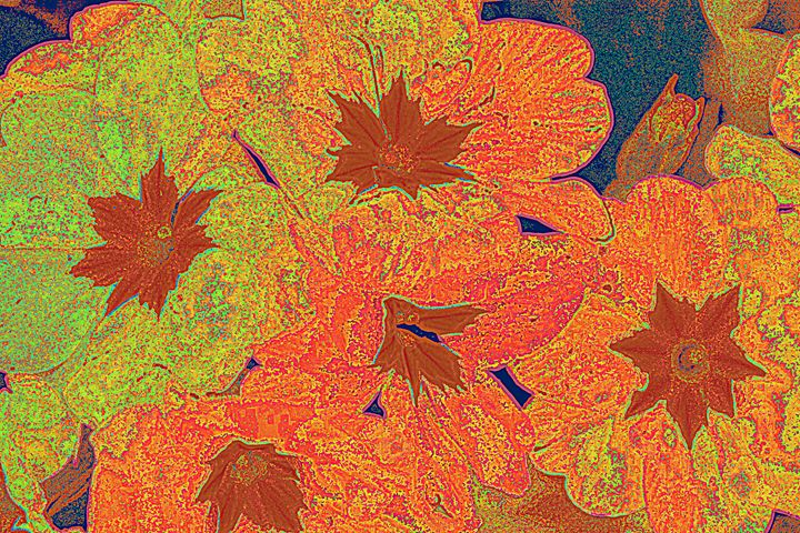 painterly primrose - Ethereal Organics...diane montana jansson