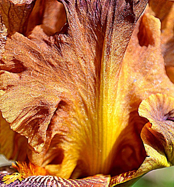 iris petal - Ethereal Organics...diane montana jansson