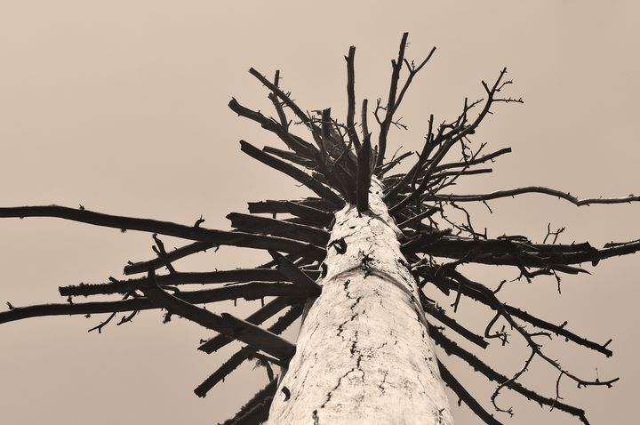 Burnt Tree 3 - Sonja Martin Photography