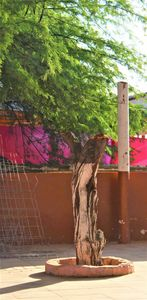Shadowed White Angolan Bark