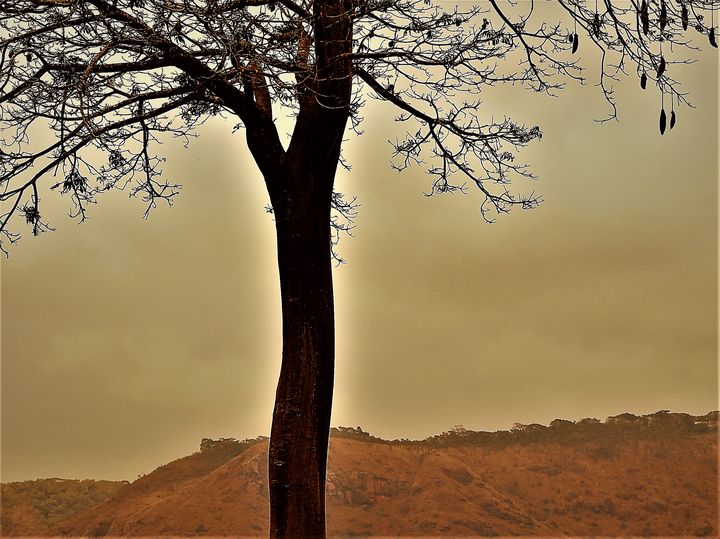 Boab Tree - LEVEL V GALLERY