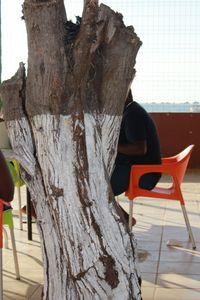 White Barked Angola