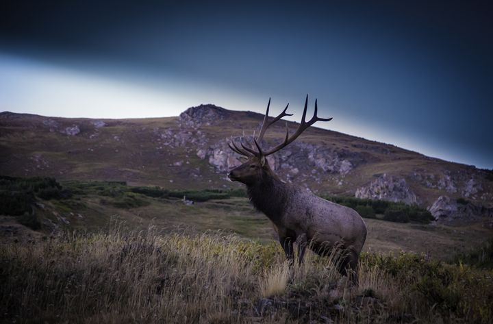 King of the mountain - Scott McKay Photography