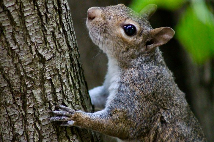 squirrel! - Sven Baldwin
