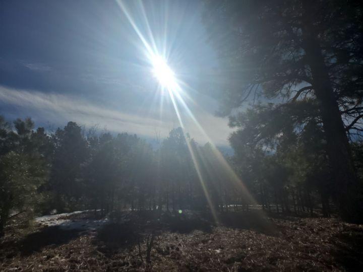 Sun burst - COOLEYS NATURE