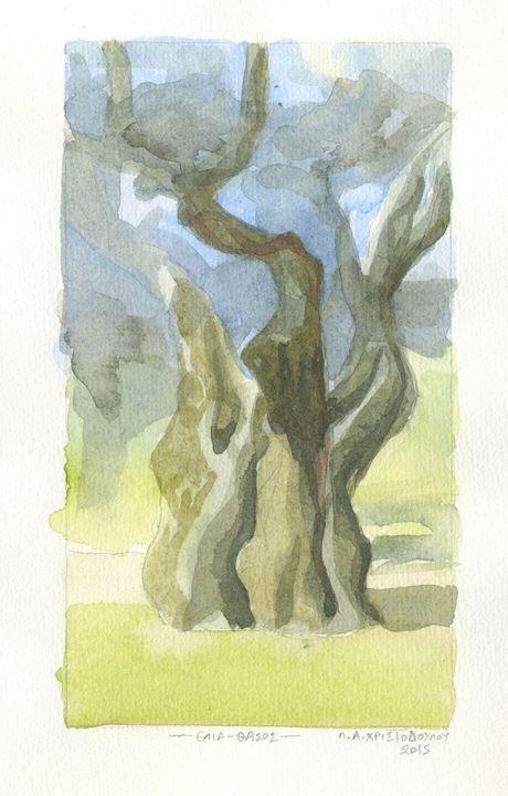 Olive tree - Thassos - Christodoulou Panagiotis