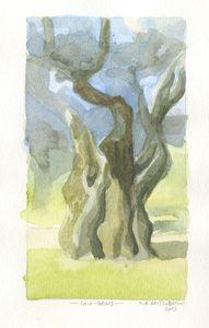 Olive tree - Thassos