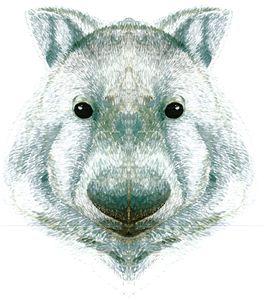 Wombat head