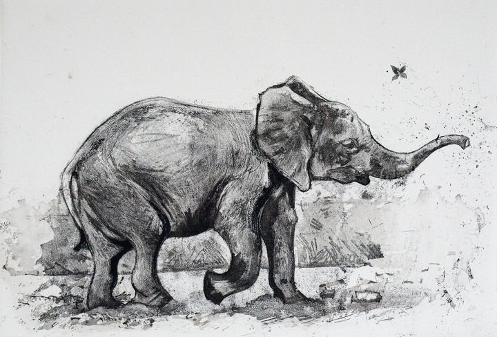 Baby Elephant etching - Limited Edition Prints