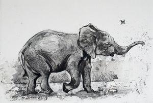 Baby Elephant etching