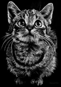 Hyperrealistic Pencil Sketch of Cat