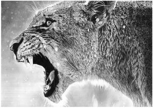The Lion Roar (Pencil Sketch)