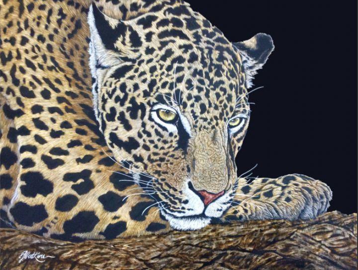 Casual Focus, Leopard - Jwatkins