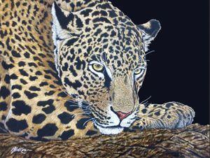 Casual Focus, Leopard