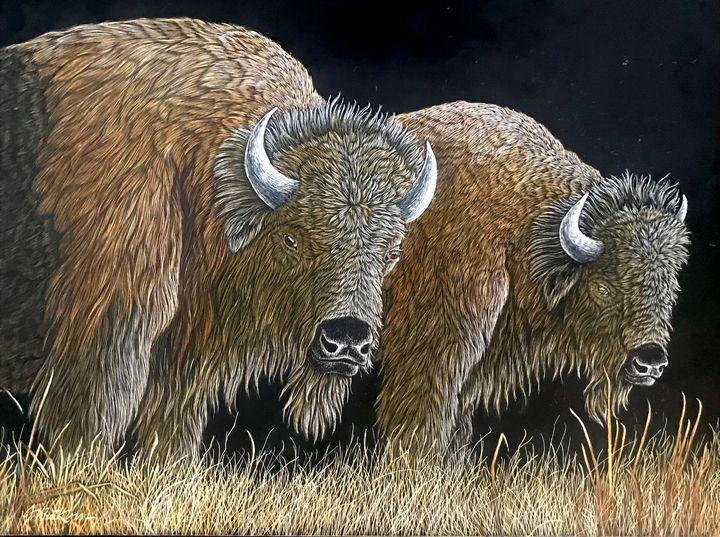 The Grazers, Bison - Jwatkins