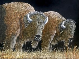 The Grazers, Bison