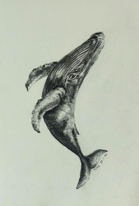 Humpback whale - BB25