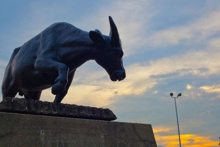 Bull - J Mendoza