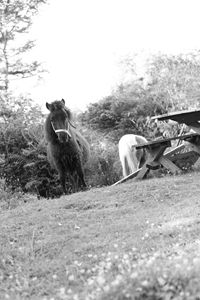 ponies in the garden