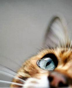 Eye of Curiosity