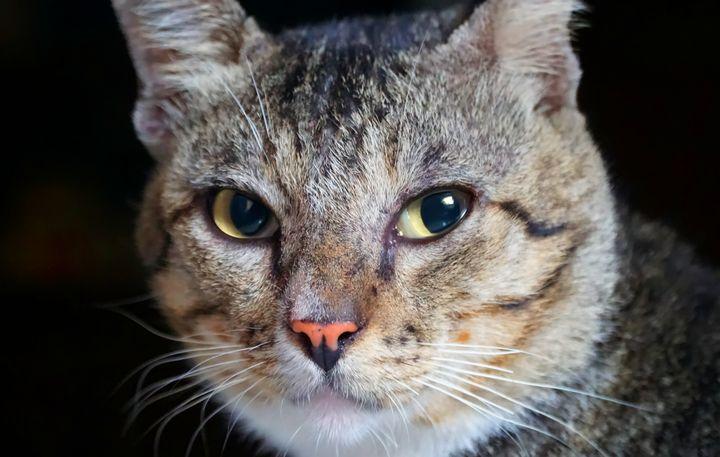 Cat Portrait - rr_helsnki
