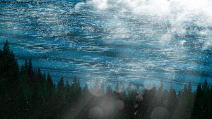 Ocean Scene with Trees