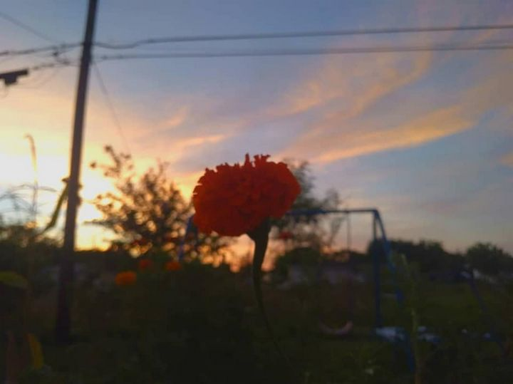 Orange Flower - liannas photography