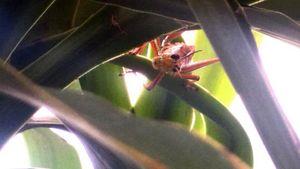 grasshopper says hello