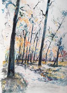 Cottonwood trees 2