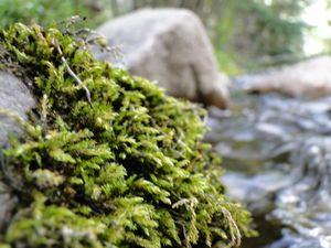 Riverside Moss