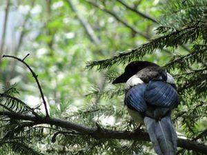 Summertime Bird