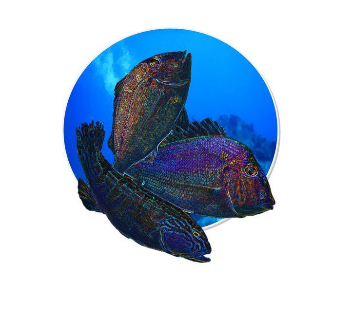 Pop Fish Circle - Kelley by the Sea