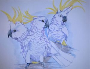 Cockatoo Mates