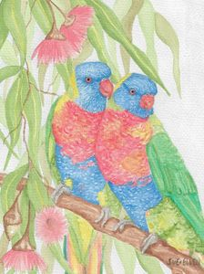 Rainbow Lorikeet Twosome