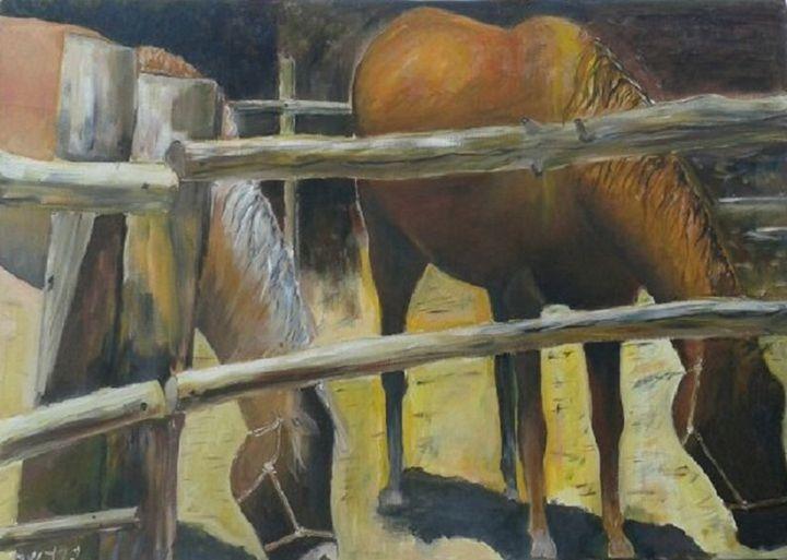 Due Cavalli - Y. Gershi