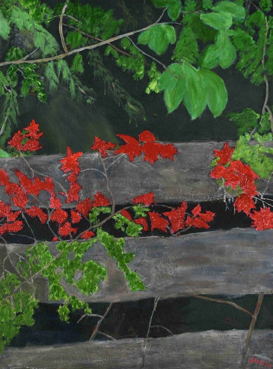 Cedar Fence - Paintings by Sheila Murphy