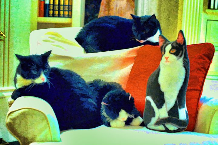Here Kitty, Kitty - Speros Photo Art- Odd things and more