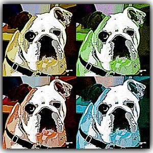 Clyde the Bull Dog